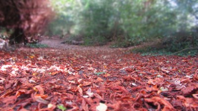 Autumn Photographs in Shere