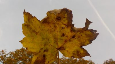 Capturing Autumn at After School Photography club