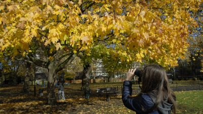 Capturing Amazing Autumn Colours on our Online Photography Course