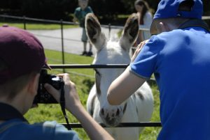 Teens photographing a donkey at Hatchlands park