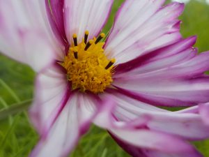 Macro photograph of purple flower taken on kids photography course