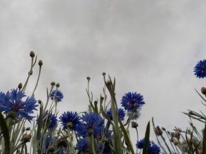 Photograph taken at a low angle of flowers against the sky