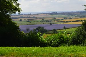 Landscape photograph of colourful fields taken on Waddesdon Manor photography course