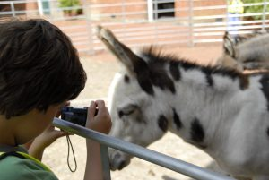 Boy taking a photo of a donkey on summer photography course for kids
