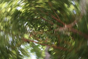 Slow shutter speed creative blur