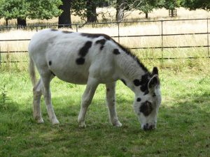 Photograph of a donkey taken by a child on a kids photography workshop at Hatchlands Park