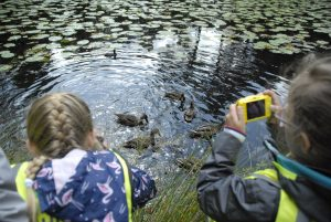 Kids photographing ducks at Tatton Park in Cheshire