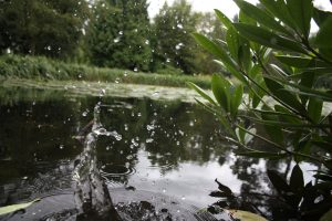 Fast shutter speed photograph of water splashing in a pond at Tatton Park