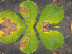Nikon coolpix mirror setting to make a funny shaped leaf