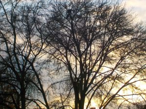 Sunset through bare trees making silhouettes autumn photography