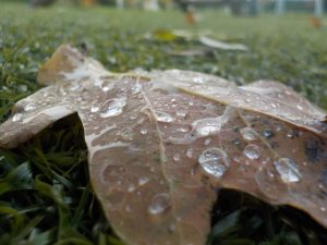 Close up of a leaf with water droplets on it after school