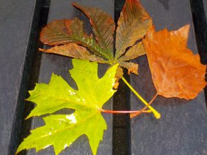 Still life photo of colourful autumn leaves taken at after school photography club