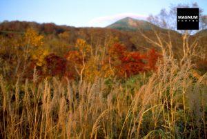 Autumn photography Hiroji Kubota inspiring photograph