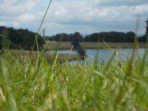 Tatton Park Landscape
