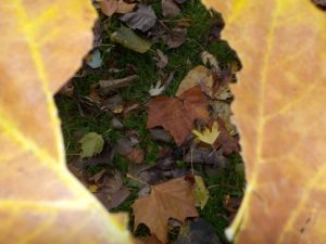 Creative photograph of autumn leaves through a hole in another leaf