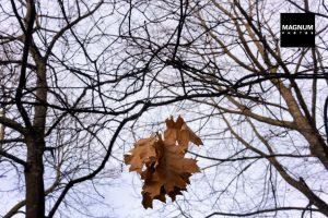 Autumn photography fun Richard Kalvar