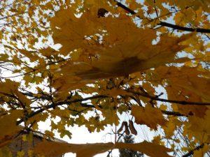 Orange leaves falling down in autumn photography fun