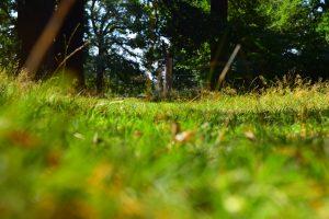 Landscape photograph of Richmond Park