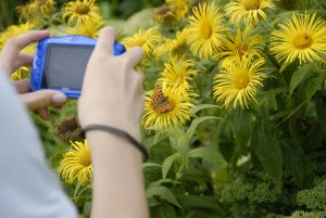 Kid taking a photo of flowers