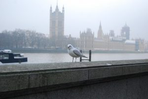 Photo of a seagull and the Parliament.